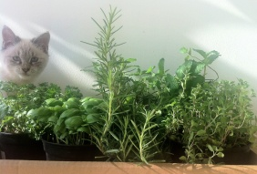 Ovie and herbs